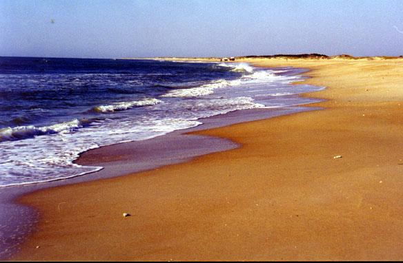 Cape Lookout Shoreline